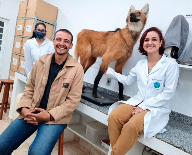 Espécie de lobo-guará está pronto para estudos na Univás